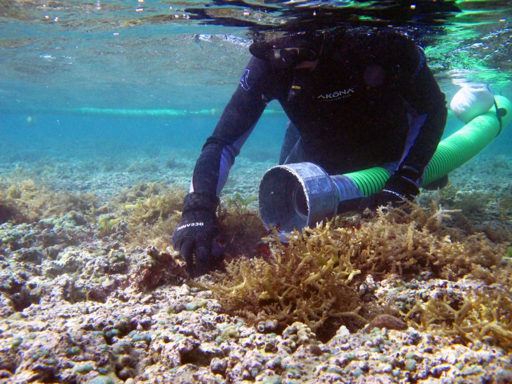 DAR diver using Super Sucker to remove invasive algae.