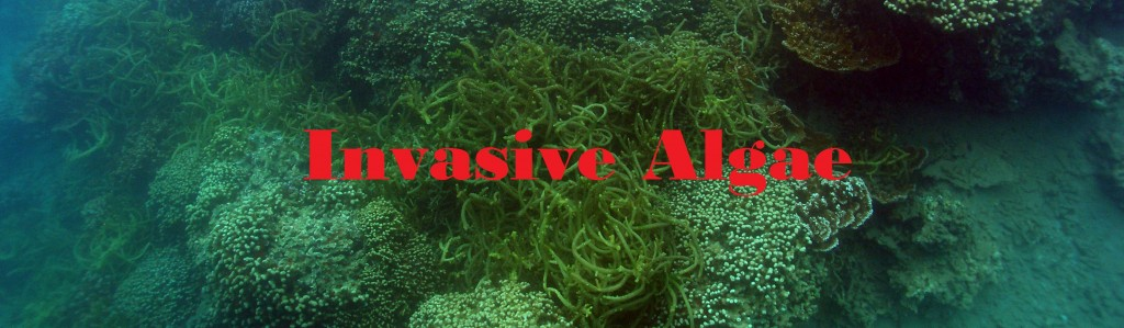 Invasive Algae