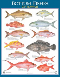 Posters of bottom fishes of Hawaii