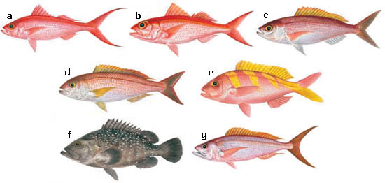 Division of aquatic resources bottom fishing for Types of fish in hawaii