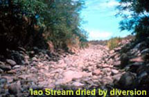 Iao stream dried by diversion