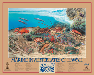 Posters of Marine invertebrates of Hawaii
