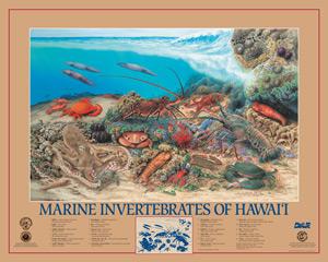 Posters of Marine invertebrates of Hawaii