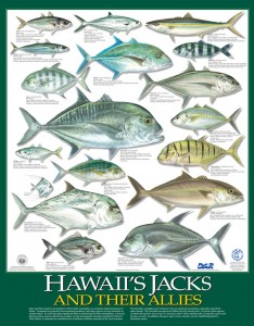 Posters of Hawaii's jacks and their allies