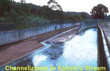 Channelization in kahaluu stream