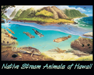 Posters of Native stream animals of Hawaii