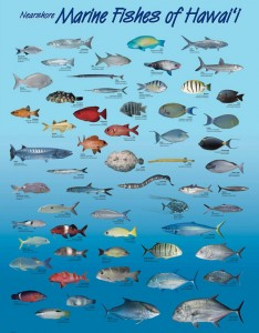 Posters of nearshore marine fishes of Hawaii