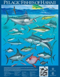 Posters of pelagic fishes of Hawaii