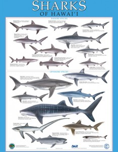 division of aquatic resources education  posters of sharks of hawaii
