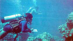 Divers counting fish on a transect.