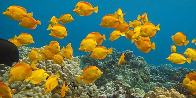 Division of aquatic resources for Saltwater fish representative species