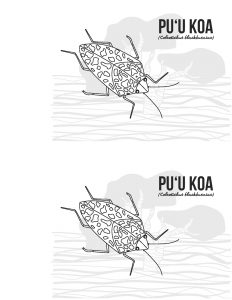 hawaiian happy face spider coloring pages   Division of Forestry and Wildlife   Student Resources ...