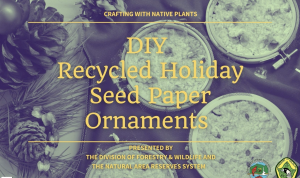 Video Thumbnail for Holiday Seed Paper Ornaments