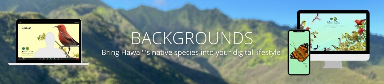 An image of a mountain skyline with graphics of computers and a phone with native species background art, reading Backgrounds: Bring Hawaiʻi's native species into your digital lifestyle