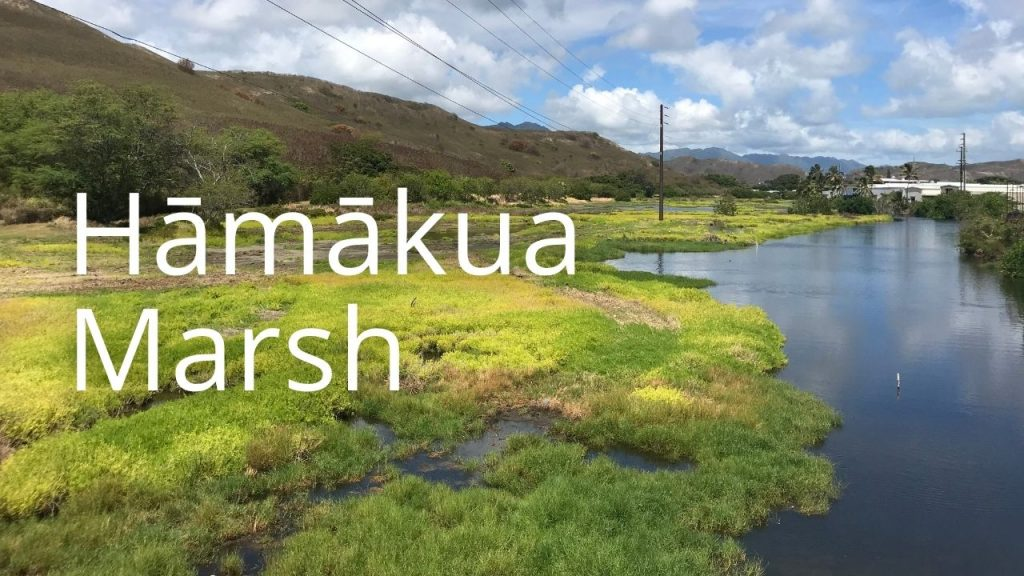 An image of Hamakua Marsh linking to more information