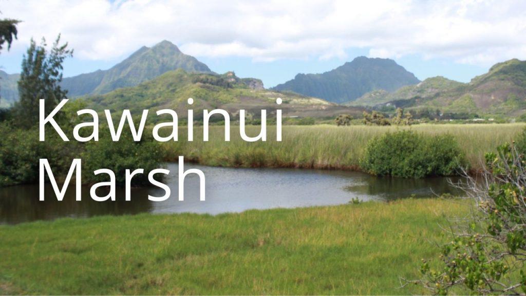An image of Kawainui Marsh linking to more information