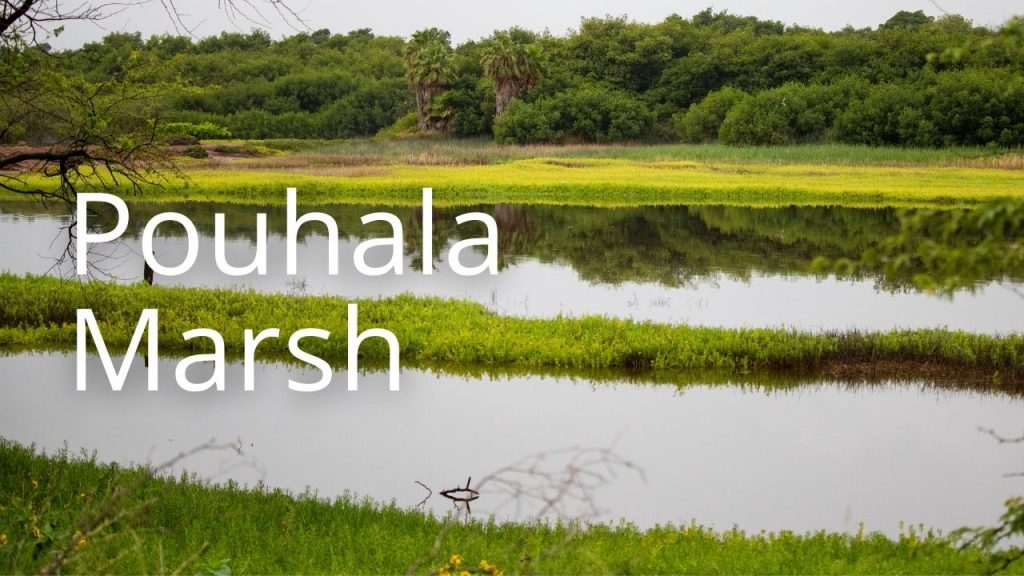 An image of Pouhala Marsh linking to more information