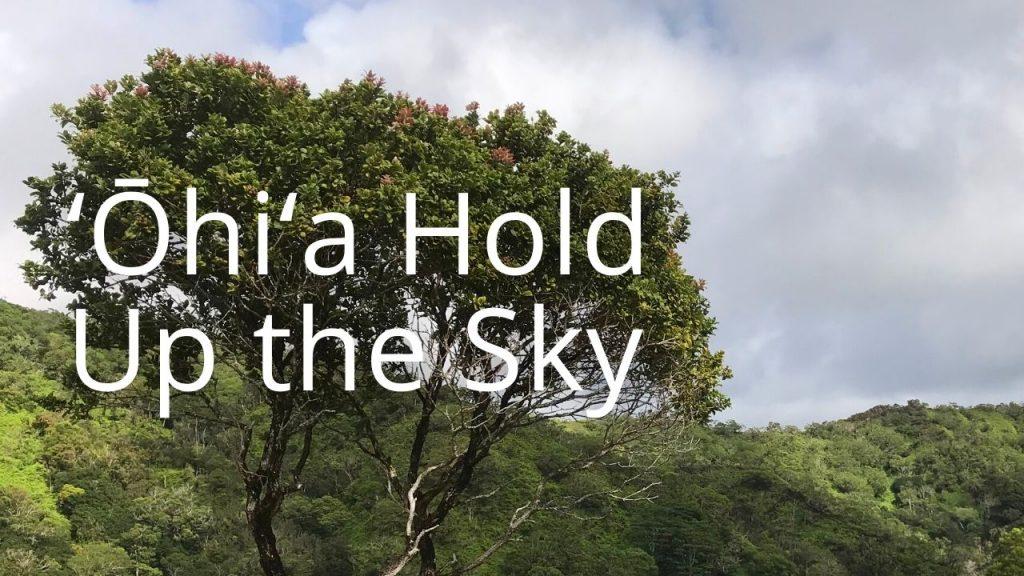 An image of an ohia tree linking to more info on ohia