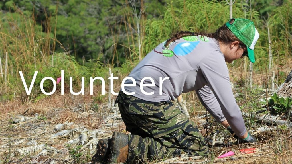An image of a person planting a tree linking to a page on volunteering