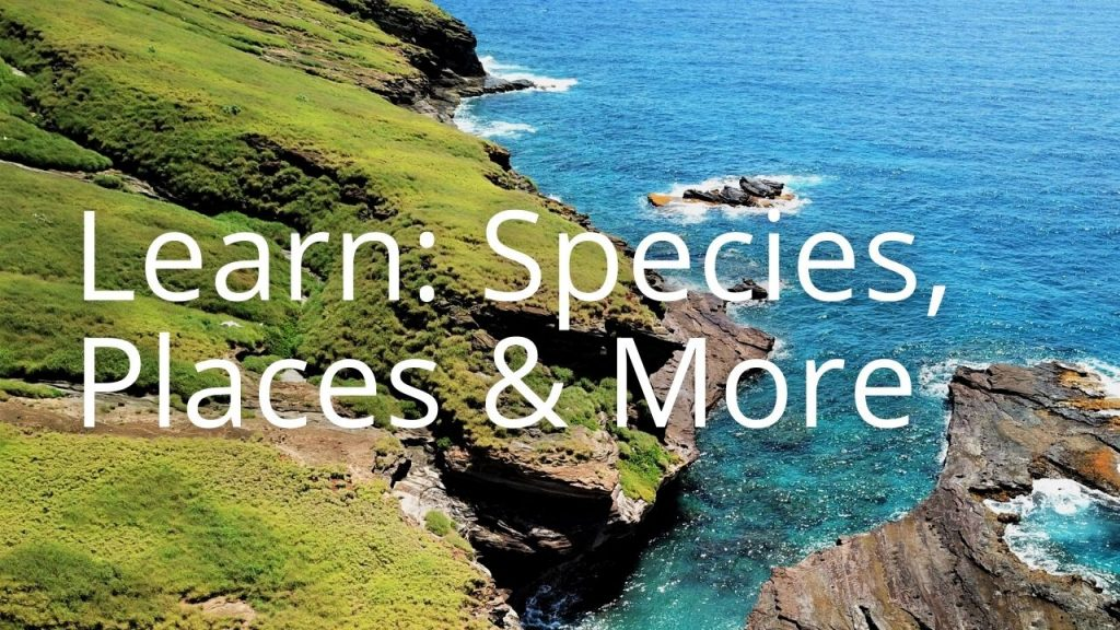 An image of the Lehua shoreline linking to educational pages on species, places, and more