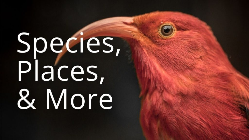 An image of an iʻiwi linking to a page with educational information on species, places, and more