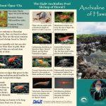 Anchialine pool brochure (1)