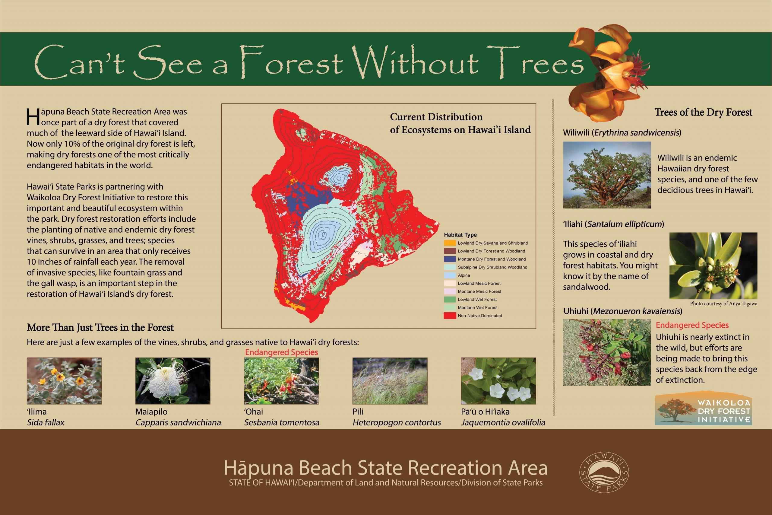 Hapuna Dry Forest Panel 6_18