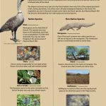 Plants and animals of Hapuna