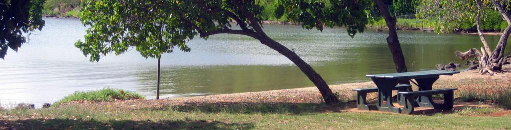 Aiea Bay shoreline