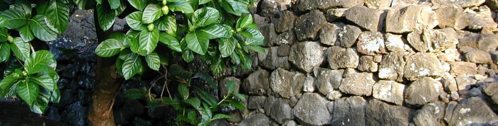 heiau stone wall