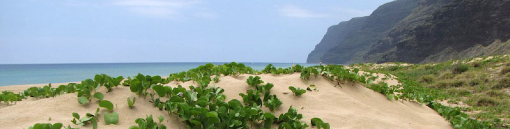 Polihale beach with sand and green leaves growing