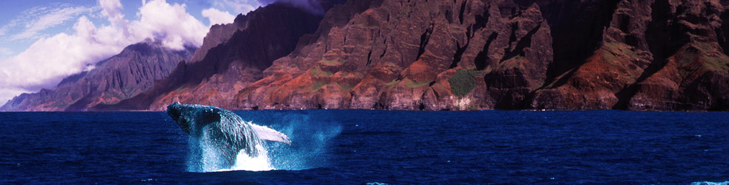Whale breaching near Napali shore