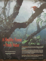 healthy-forest-poster-thumbnail