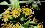 lyon-arboretum-facility-thumbnail