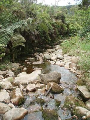Kawaikoi stream