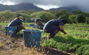 image of people farming
