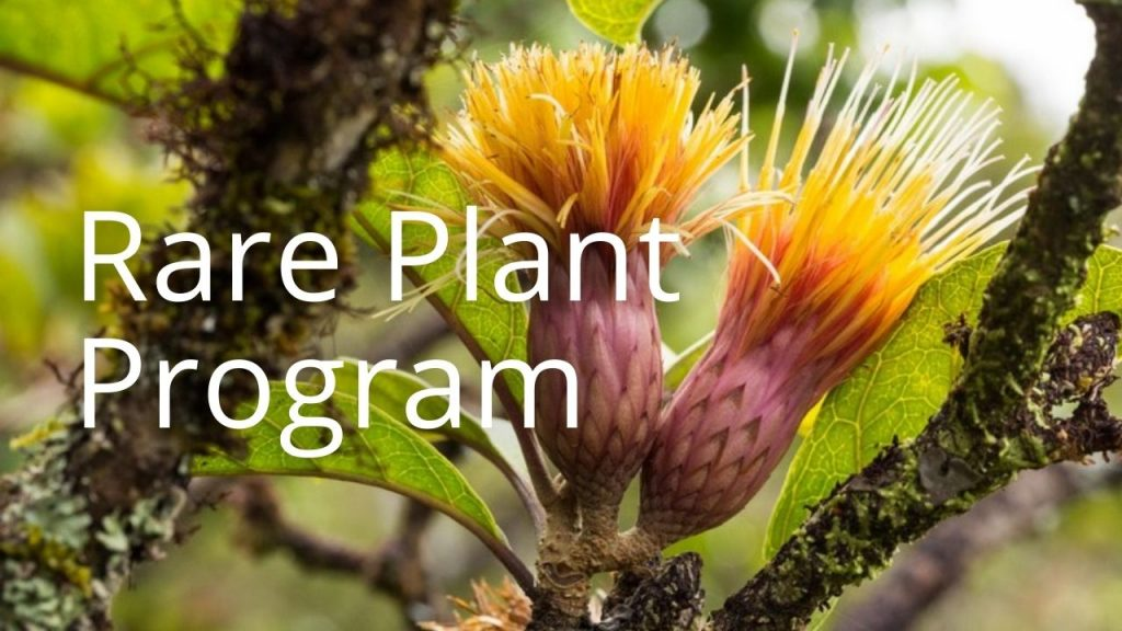 An image of a plant linking to a page called Rare Plant Program