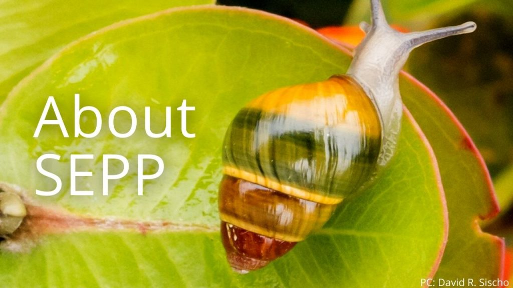 An image of a tree snail linking to About SEPP