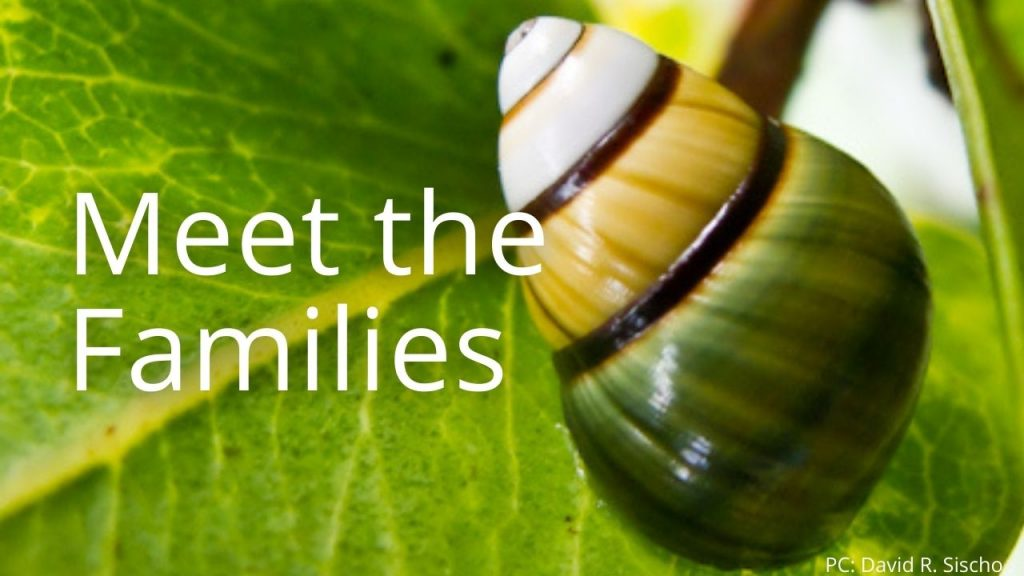 An image of a tree snail linking to Meet the families