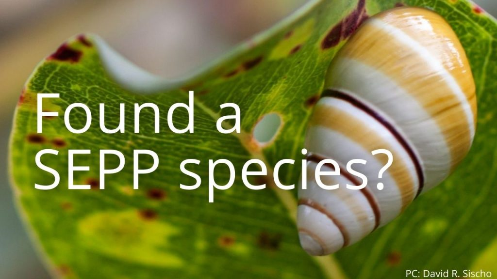An image of a tree snail linking to Found a SEPP Species?