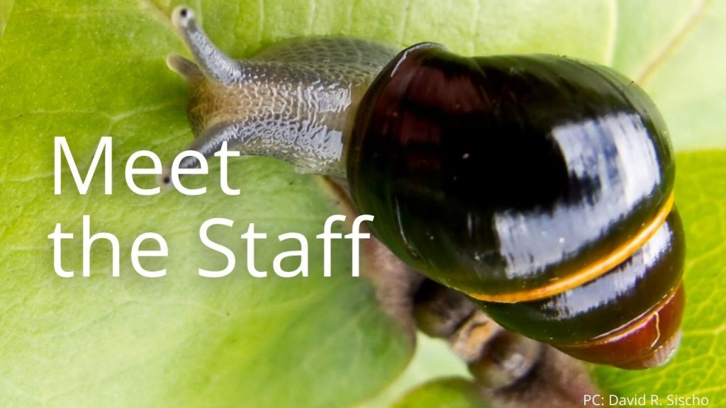 An image of a tree snail linking to Meet the Staff