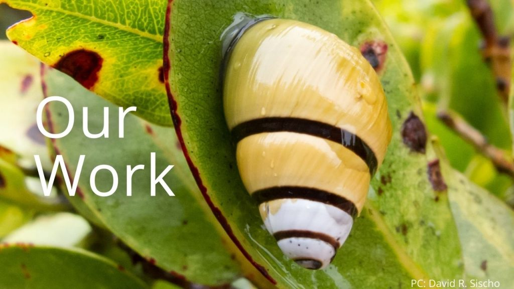 An image of a tree snail linking to Our work