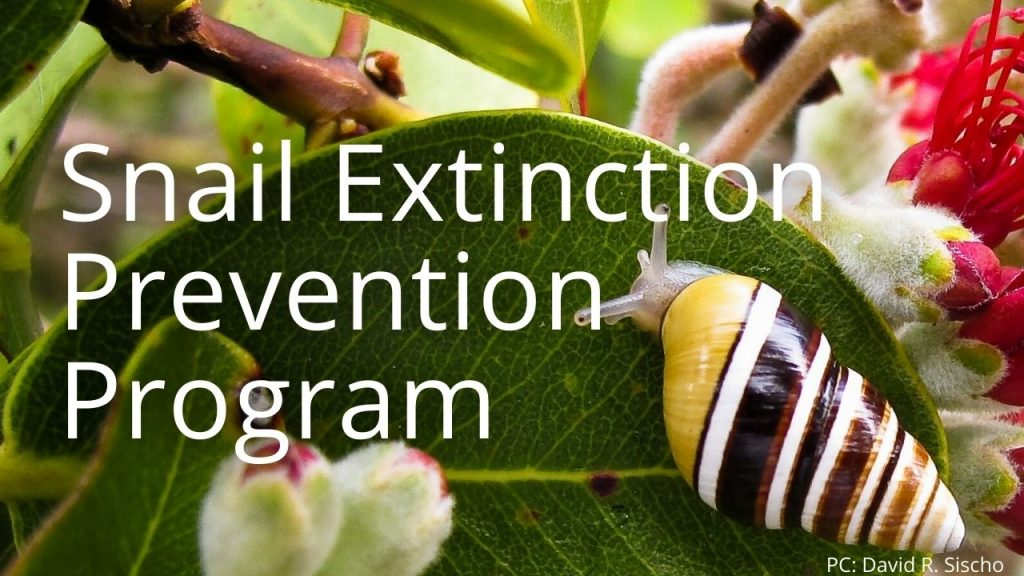 An image of a tree snail linking to a page called Snail Extinction Prevention Program