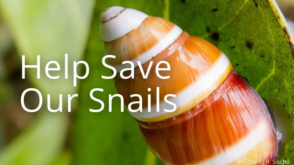 An image of a tree snail linking to Save our Snails