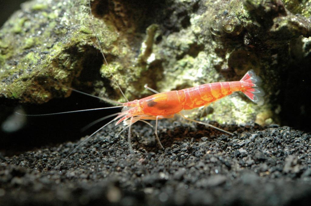 image of crustacean