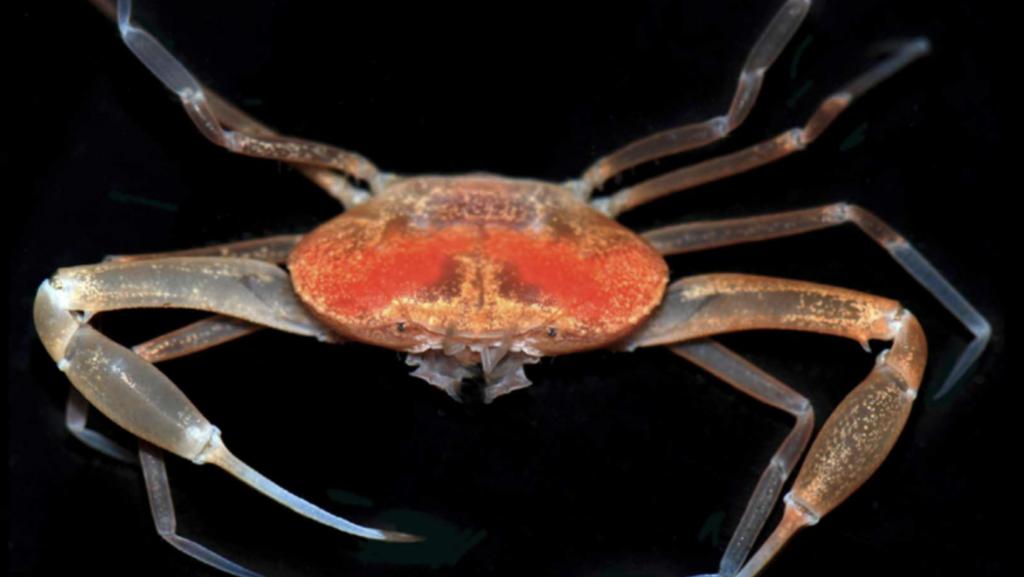 image of crab