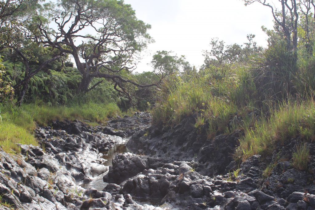 Hanawi NAR mid-elevation native mesic forest, east Haleakala, stream.