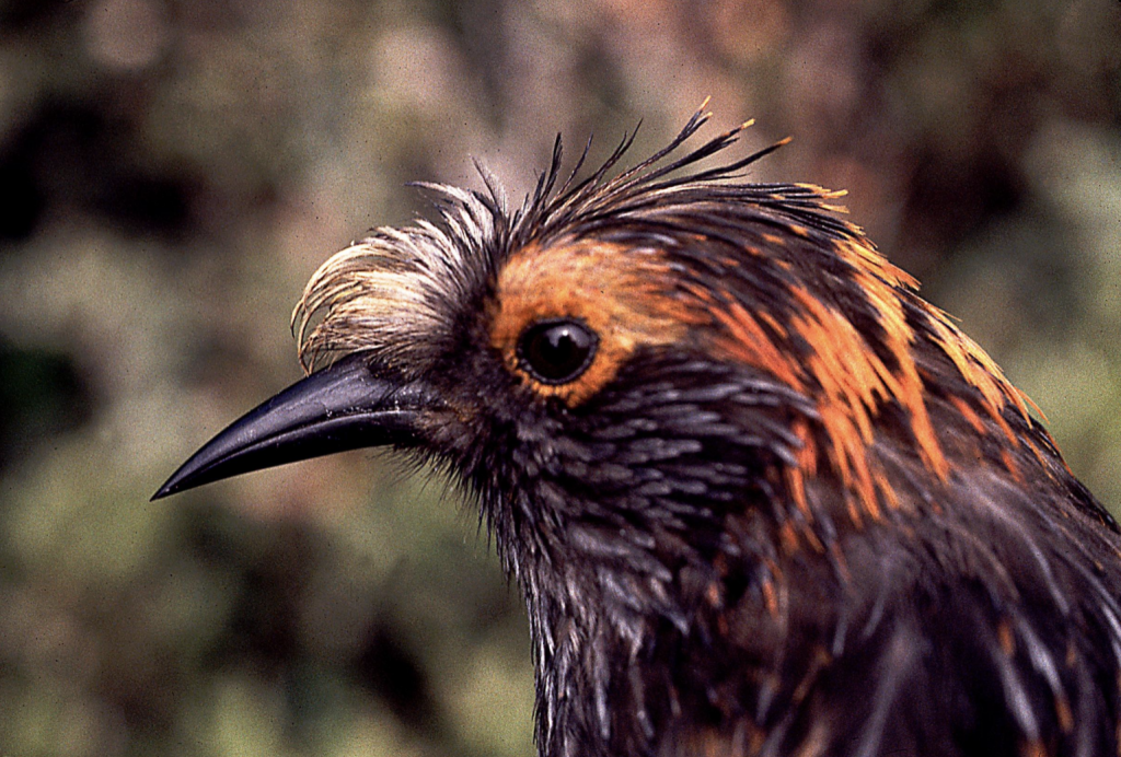 image of bird head