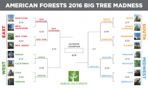 2016_Big-Tree-Madness_bracket