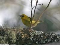 CREP Bird image_mini